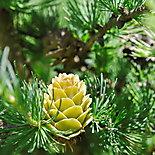 Z życia roślin